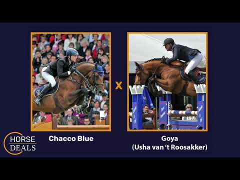 Chacco Blue x Goya