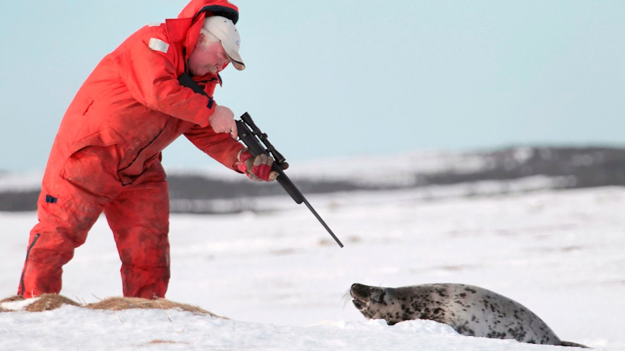 Quick Hits: Open Season On Canadian Seals, Feds Watching Carter Page, And More... thumbnail