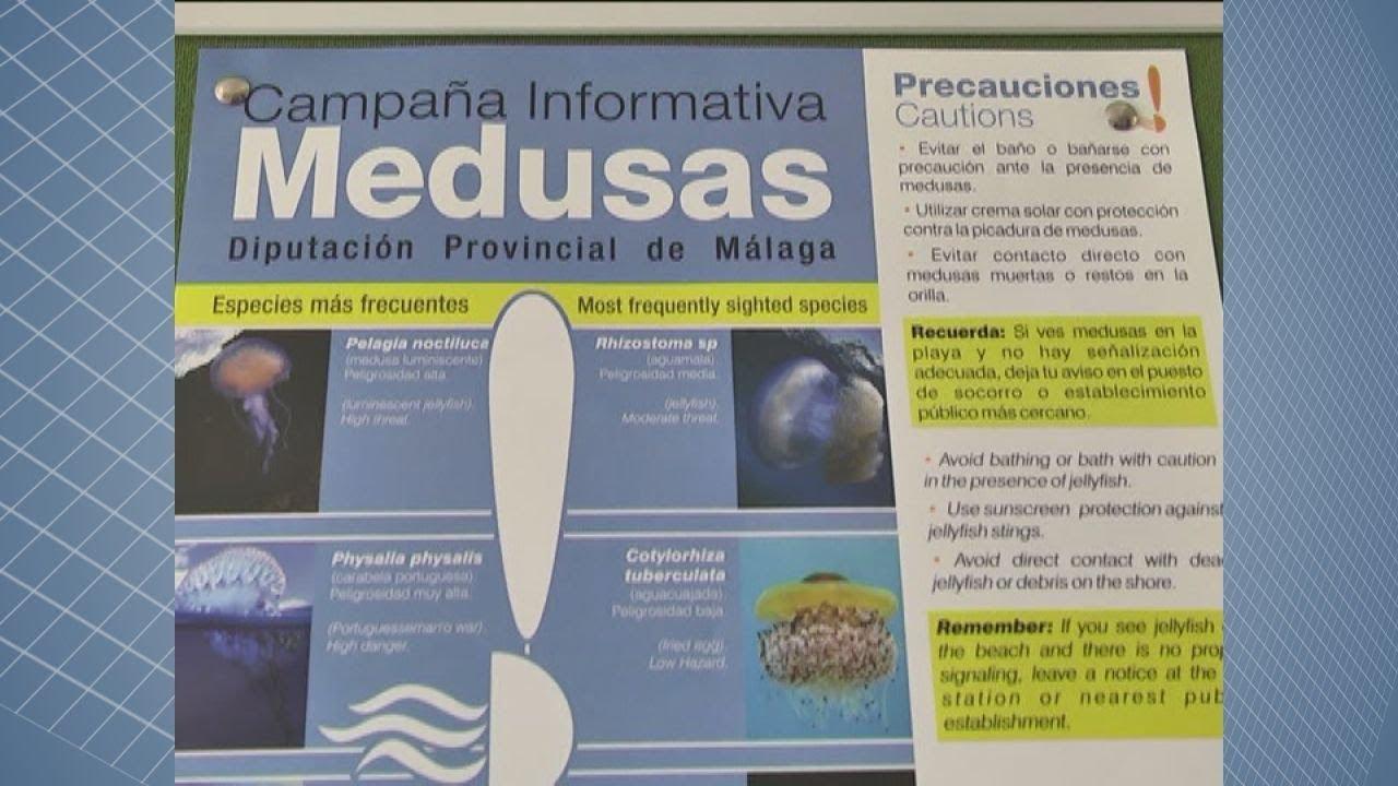 EXPERTOS VEN IMPROBABLE QUE SE REPITAN LAS PLAGAS DE MEDUSAS