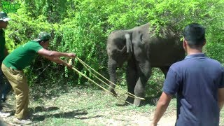 "Saving a Young Elephant from ""Hakka Patas"": Humans are kind"