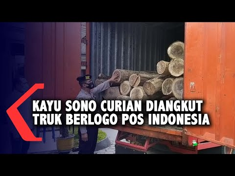 kayu sono curian diangkut truk berlogo pos indonesia