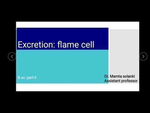 Hogyan lehet az enterobiosis