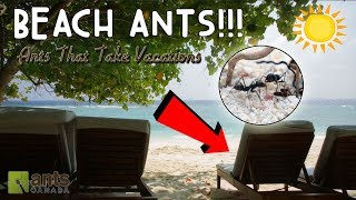 Beach Ants