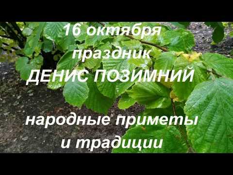 16 октября праздник Денис Позимний . Народные приметы и традиции