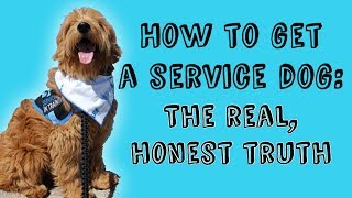 HOW TO GET A SERVICE DOG || The Real, Honest Truth