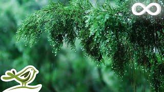Relaxing Music & Soft Rain Sounds   Beautiful Piano Music For Sleeping, Studying & Relaxing