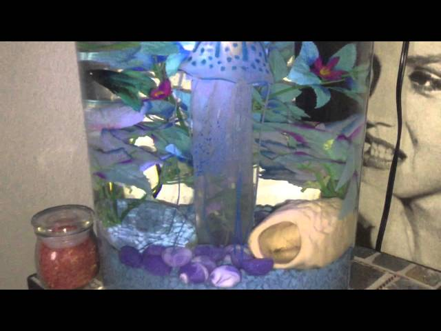My betta in his 2 gallon 360 view Aquarium fish tank with led color changing lights