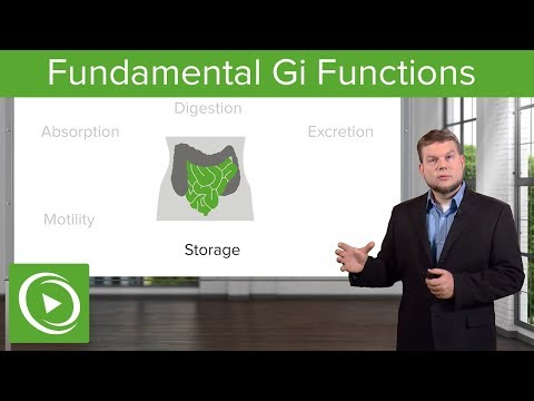 Fundamental Gi Functions – Physiology | Lecturio