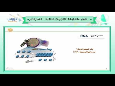الثالث المتوسط   الفصل الدراسي الثاني 1438   علوم   مادة الوراثة -2 (الجينات - الطفرات)
