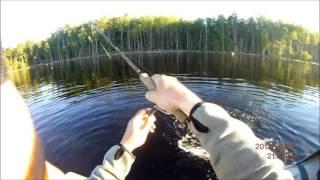 Рыбалка на реке онега летом