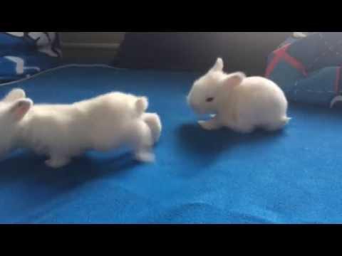 Kaninchen sind 2 Wochen🐰