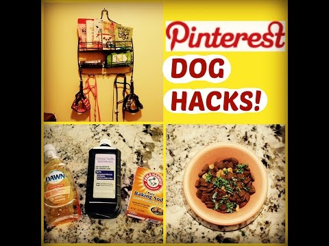 PINTEREST DOG HACKS!