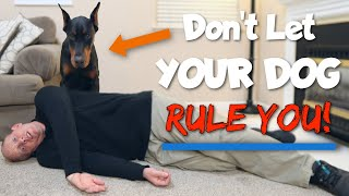 How to Get a Doberman to See You as the Alpha
