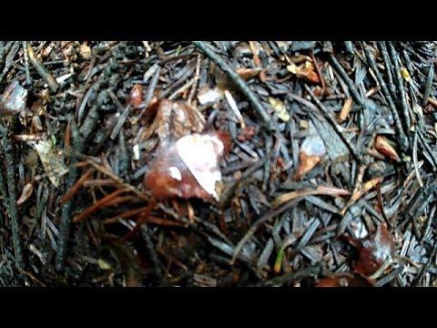 Перший Білий Гриб в цьому сезоні, Прогулка по лісі після дощу