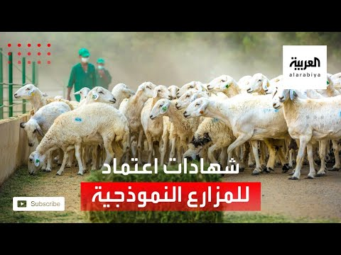 العرب اليوم - شاهد: وزير البيئة والزراعة يسلم شهادات اعتماد