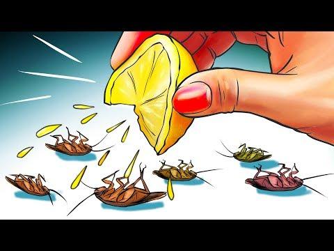 12 Formas Naturales De Deshacerse De Las Cucaracha Para Siempre