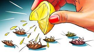 12 Formas naturales de deshacerse de las cucarachas permanentemente