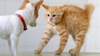 Почему собаки и кошки дерутся? Почему кошки с собаками не дружат?