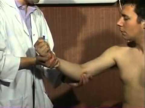 Les muscles du membre supérieur la disposition de la fonction