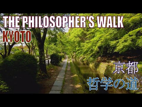 【4K Town Walking Japan #178】The Philosopher's Walk  KYOTO  城镇漫歩 哲学の道 京都