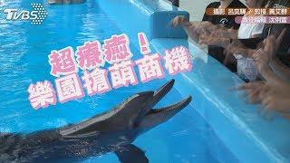 超療癒!樂園搶萌商機 摸海豚肚肚、餵食狐猴
