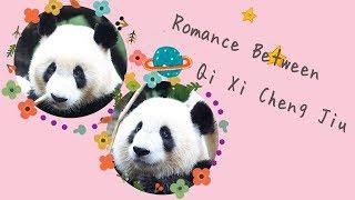 A Love Story Between Qi Xi & Cheng Jiu | iPanda