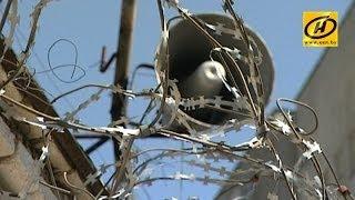 Амнистия в Беларуси: кто выйдет на свободу, а кому уменьшат срок наказания?