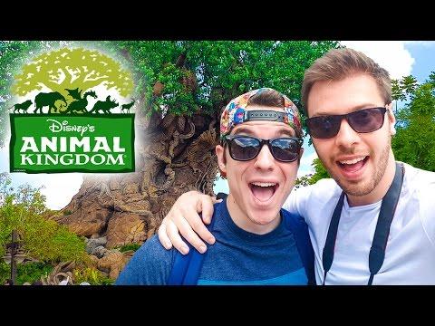 DISNEY WORLD'S ANIMAL KINGDOM 🦁🐗🐲 - Vlog USA