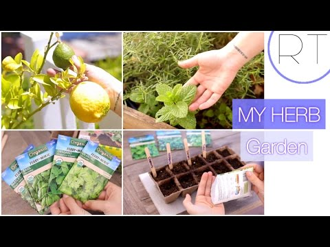 Herb Garden Tour + DIY Garden Starting Ideas