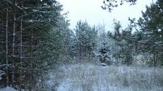 "Интро ""Лес, первый снег"" (без звука)"