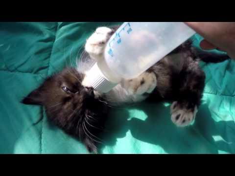 มีอาการอะไรในแมวกับเวิร์ม