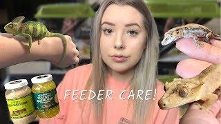 FEEDING MY REPTILES + FEEDER CARE!