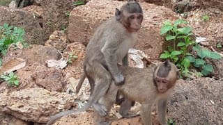 Sweet pea friend monkey, Why you do this baby monkey?, funny monkey