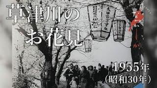 1955年 草津川のお花見【なつかしが】