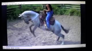 Horse Bucks For No Reason Or For A Reason No One Sees - Most Horse Problems Are People Problems