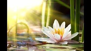 "Peaceful Music, Relaxing Music, Instrumental Music ""Quiet Morning Lake"" by Tim Janis"