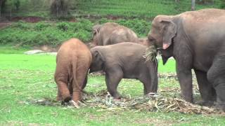 My Week At Elephant Nature Park in Thailand