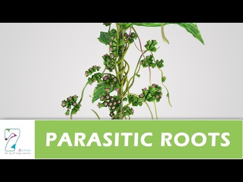 Diferențe de platyhelminthes și nematode