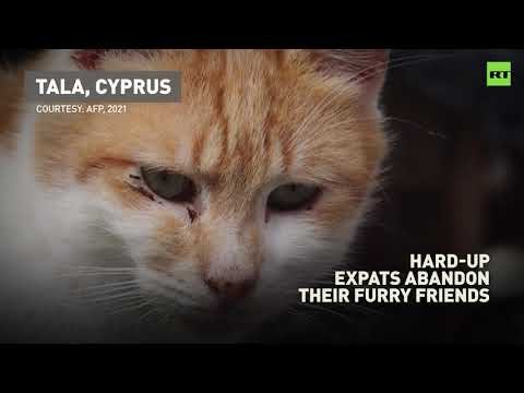 Hard-up expats leave Cyprus, abandoning their furry friends