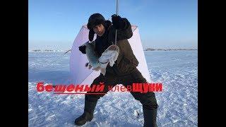 Бешеный клев щуки! рыбалка Казахстан 2018  перволедье.