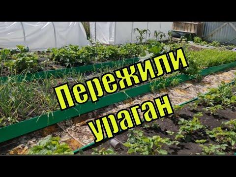 Огород некудышного огородника. Пережили ураган.Чудотеплица./Семья Фетистовых