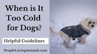 When is it Too Cold for Dogs?  Helpful Guidelines