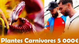 Plante Carnivores à 5€ VS 5000€ avec LeBouseuh !