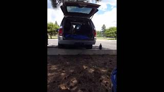 Dual Purpose K-9 Available – Vehicle Extraction Demo