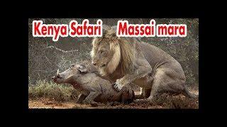 Travel Kenya Safari  Masai Mara - day 1