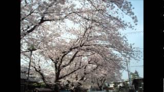 です。松山千春カバー