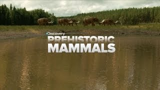 A Look At Prehistoric Mammals