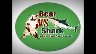 Bear vs. Shark - Catamaran