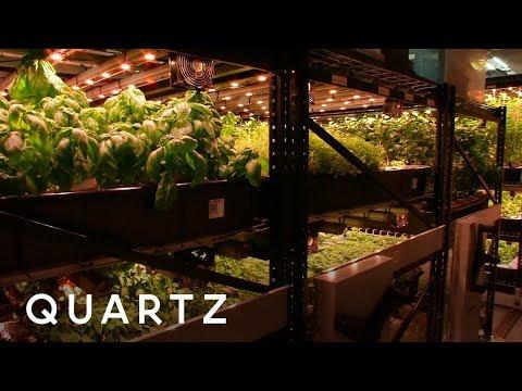 Farming in a New York City Basement