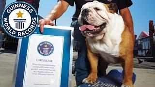 Gambar cover Farewell to Tillman, former fastest dog on a skateboard - Guinness World Records